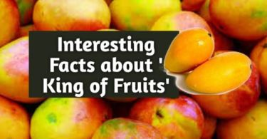 Top 10 Interesting Facts about Mangoes
