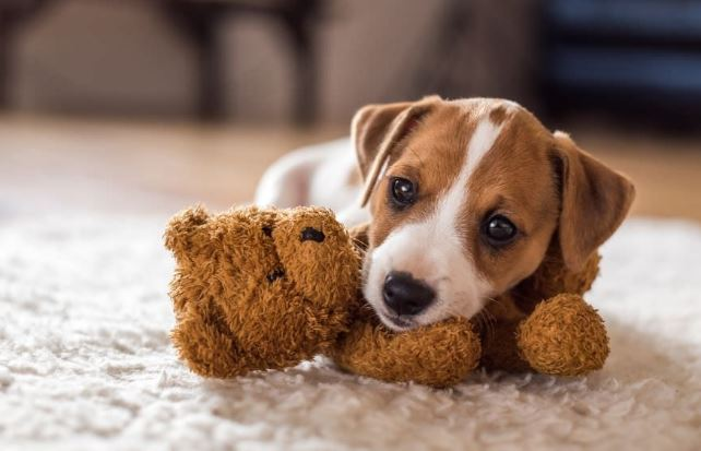 Top 5 ways to puppy proof your home